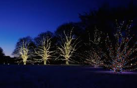 Visit the beautiful lights display at Longwood Gardens this holiday season.